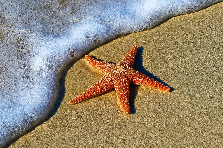 Divulgar fotos ruins é como morrer na praia